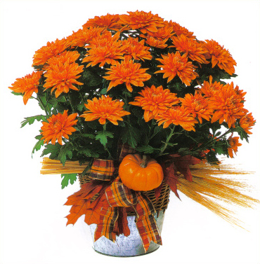 Fall Harvest Mum